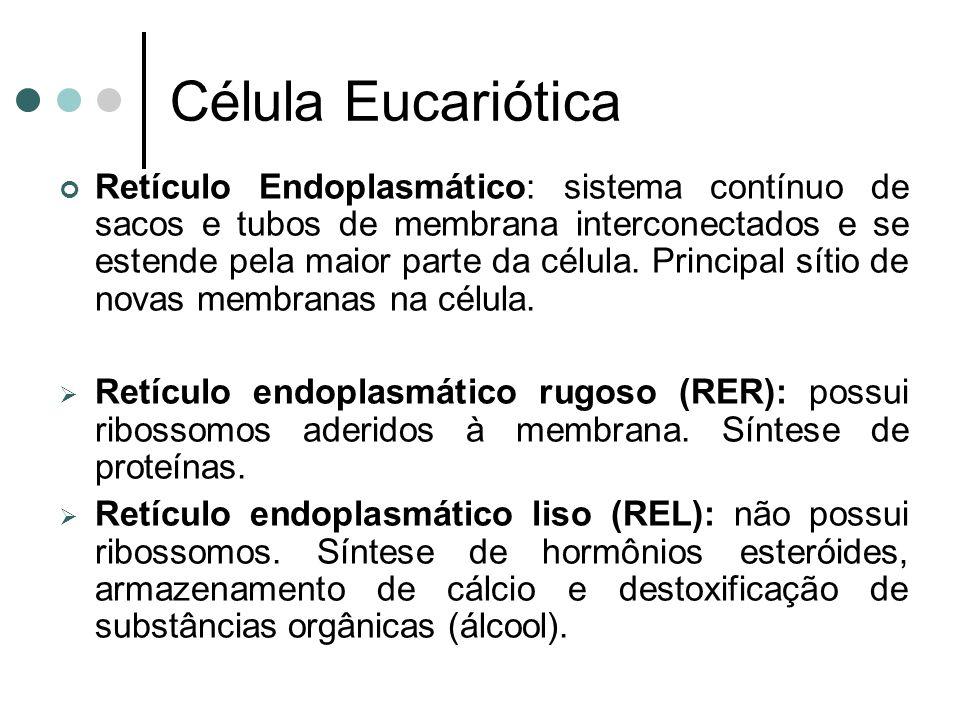 Célula Eucariótica Retículo Endoplasmático: sistema contínuo de sacos e tubos de membrana interconectados e se estende pela maior parte da célula. Pri
