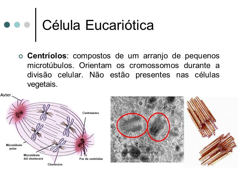 Célula Eucariótica Centríolos: compostos de um arranjo de pequenos microtúbulos. Orientam os cromossomos durante a divisão celular. Não estão presente