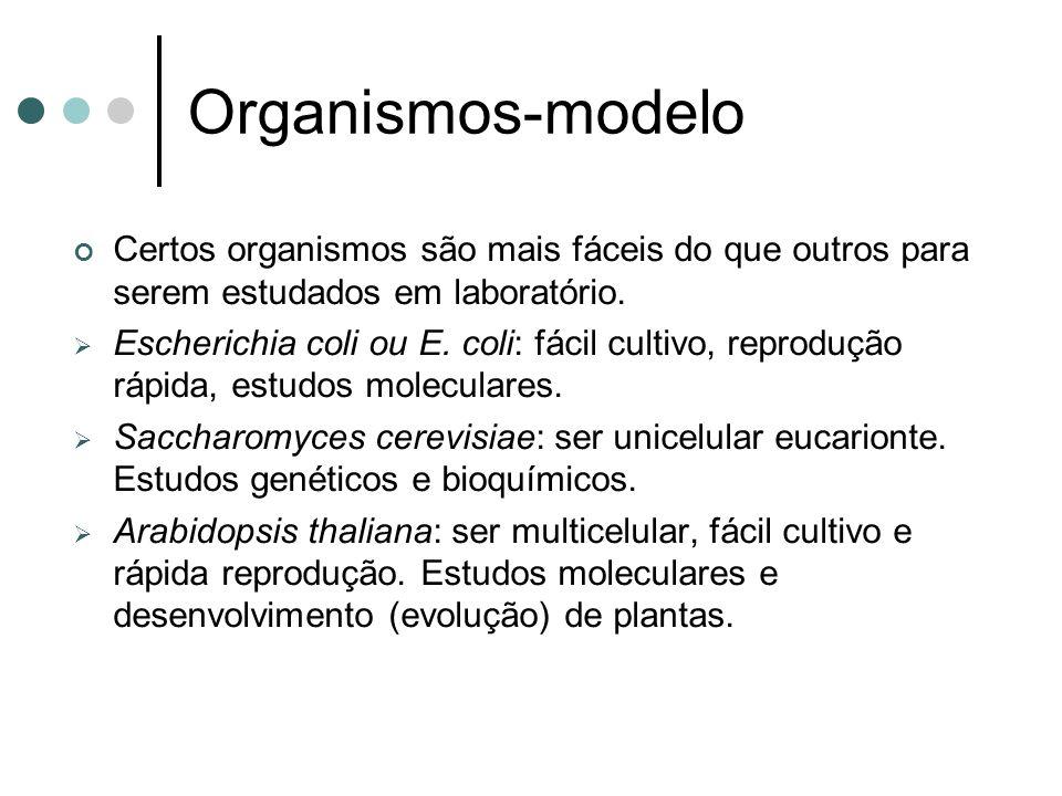 Organismos-modelo Certos organismos são mais fáceis do que outros para serem estudados em laboratório. Escherichia coli ou E. coli: fácil cultivo, rep