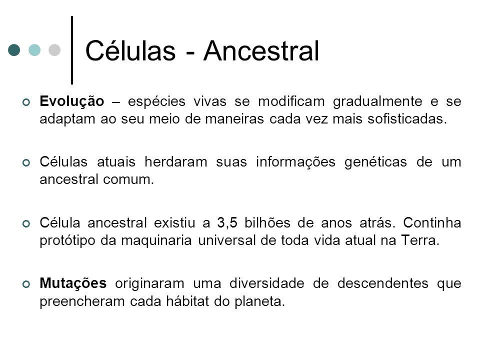 Células - Ancestral Evolução – espécies vivas se modificam gradualmente e se adaptam ao seu meio de maneiras cada vez mais sofisticadas. Células atuai