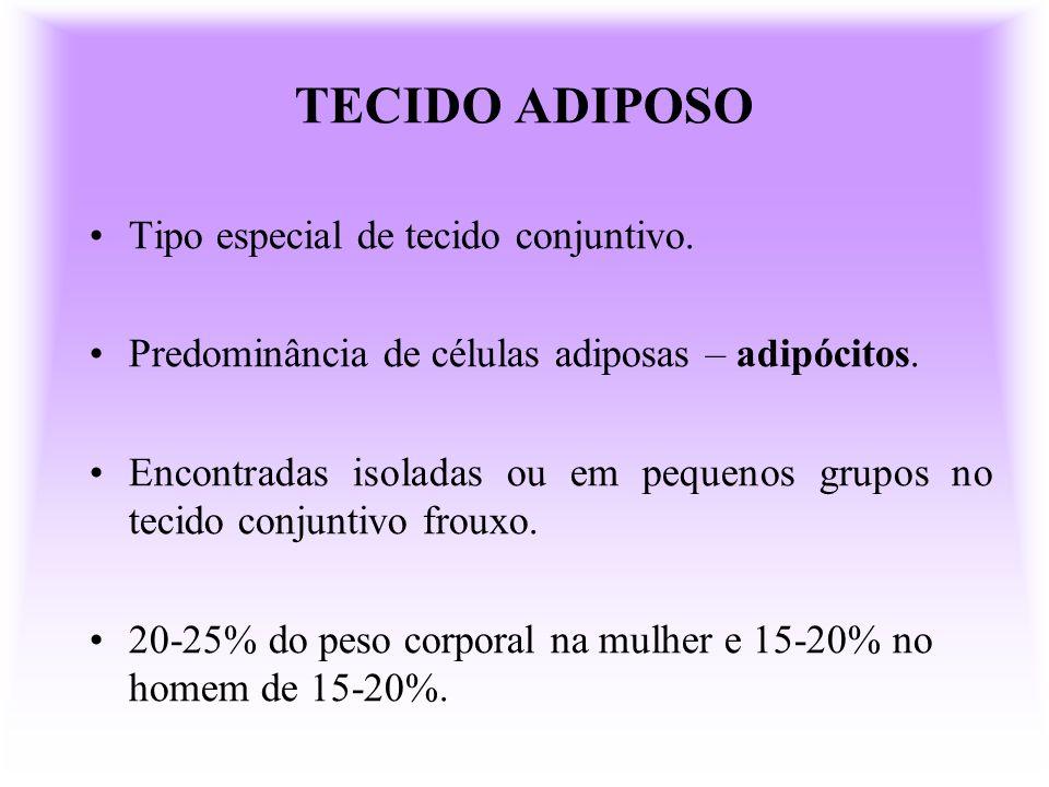 TECIDO ADIPOSO Tipo especial de tecido conjuntivo. Predominância de células adiposas – adipócitos. Encontradas isoladas ou em pequenos grupos no tecid