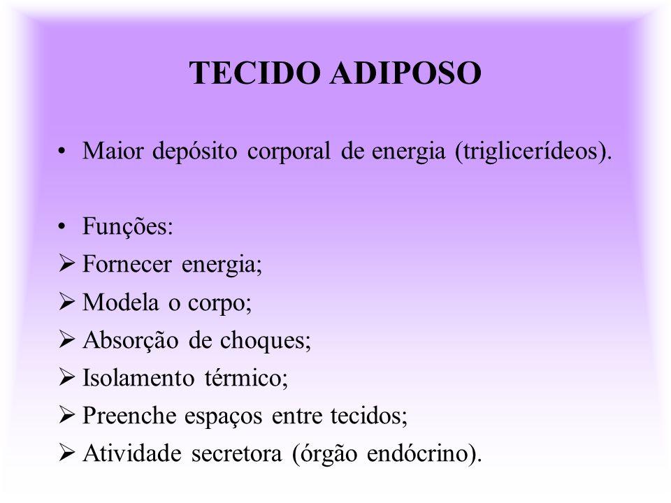 TECIDO ADIPOSO Maior depósito corporal de energia (triglicerídeos). Funções: Fornecer energia; Modela o corpo; Absorção de choques; Isolamento térmico