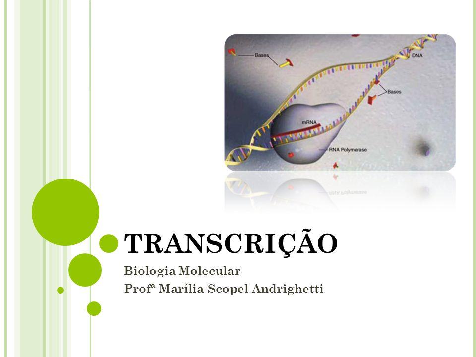 TRANSCRIÇÃO Biologia Molecular Profª Marília Scopel Andrighetti