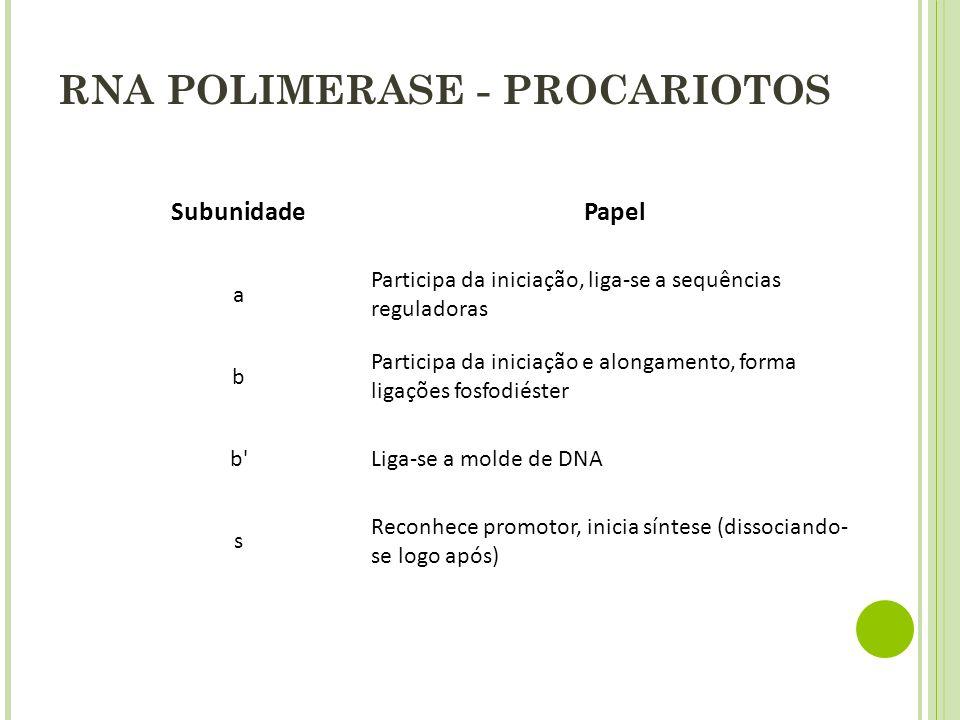 RNA POLIMERASE - PROCARIOTOS SubunidadePapel a Participa da iniciação, liga-se a sequências reguladoras b Participa da iniciação e alongamento, forma