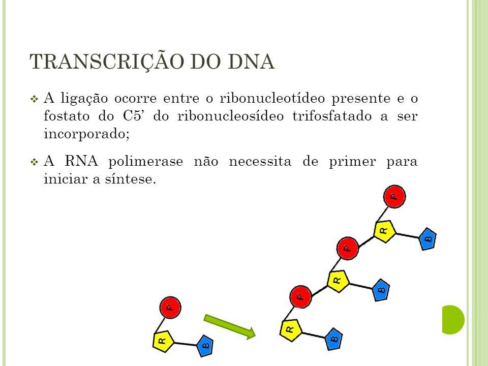 TRANSCRIÇÃO DO DNA A ligação ocorre entre o ribonucleotídeo presente e o fostato do C5 do ribonucleosídeo trifosfatado a ser incorporado; A RNA polime