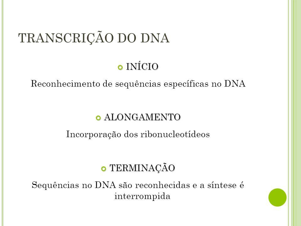 TRANSCRIÇÃO DO DNA INÍCIO INÍCIO Reconhecimento de sequências específicas no DNA ALONGAMENTO ALONGAMENTO Incorporação dos ribonucleotídeos TERMINAÇÃO