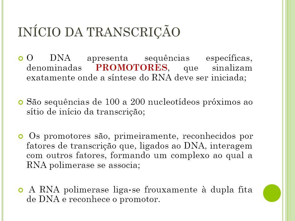 INÍCIO DA TRANSCRIÇÃO O DNA apresenta sequências específicas, denominadas PROMOTORES, que sinalizam exatamente onde a síntese do RNA deve ser iniciada