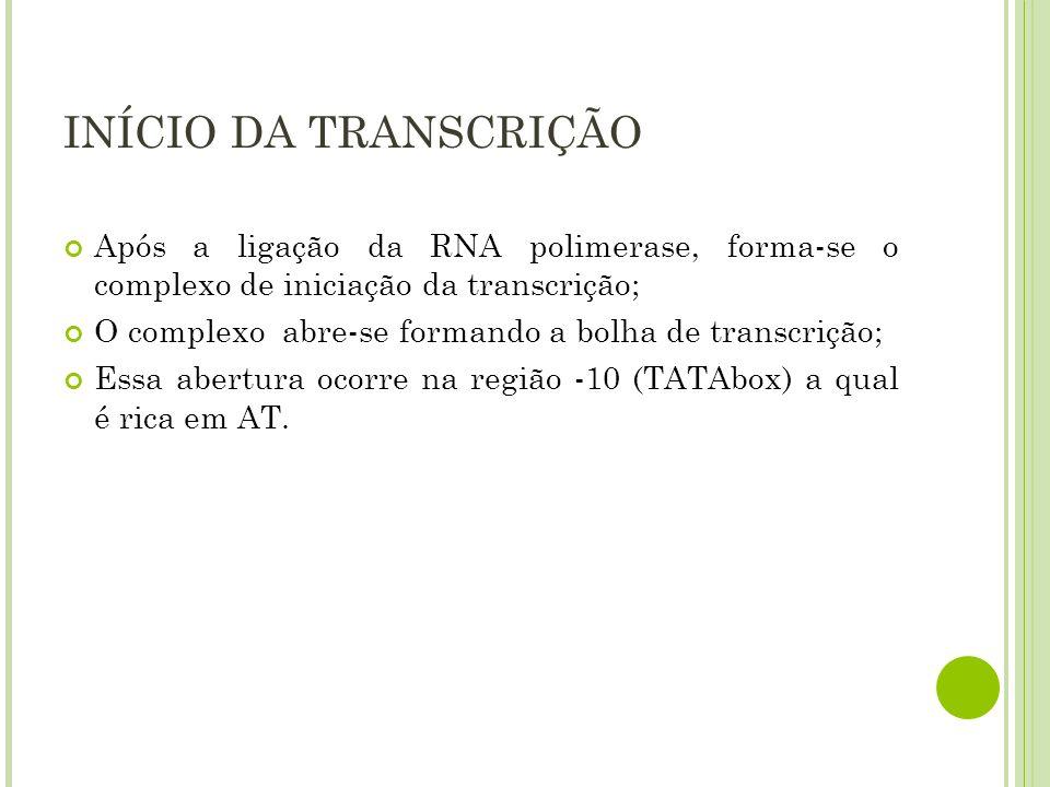 INÍCIO DA TRANSCRIÇÃO Após a ligação da RNA polimerase, forma-se o complexo de iniciação da transcrição; O complexo abre-se formando a bolha de transc