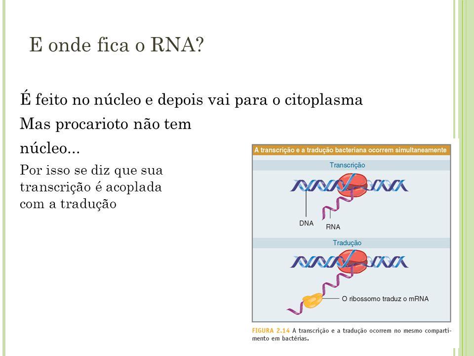 E onde fica o RNA? É feito no núcleo e depois vai para o citoplasma Mas procarioto não tem núcleo... Por isso se diz que sua transcrição é acoplada co