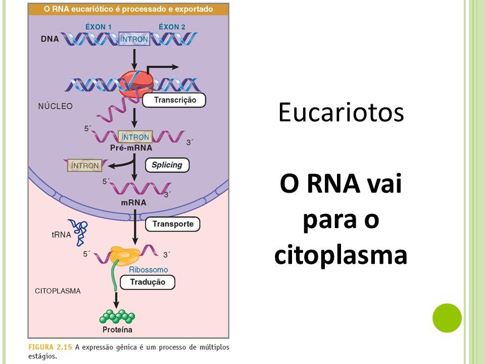 Eucariotos O RNA vai para o citoplasma