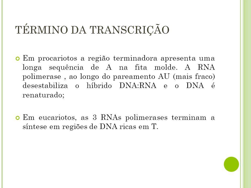Em procariotos a região terminadora apresenta uma longa sequência de A na fita molde. A RNA polimerase, ao longo do pareamento AU (mais fraco) desesta