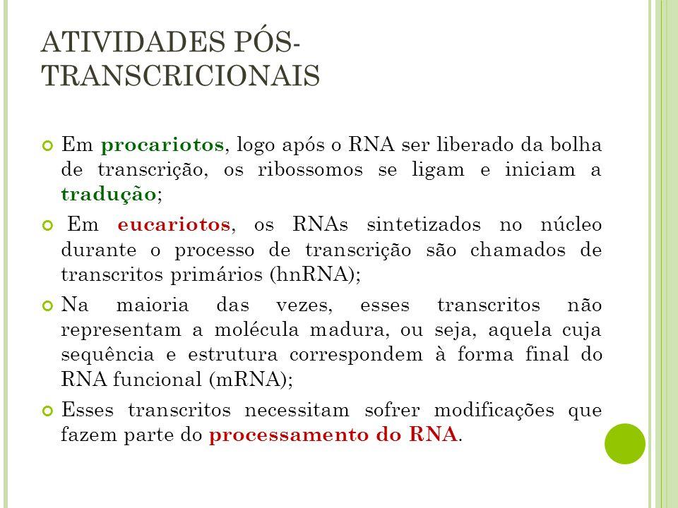 Em procariotos, logo após o RNA ser liberado da bolha de transcrição, os ribossomos se ligam e iniciam a tradução ; Em eucariotos, os RNAs sintetizado