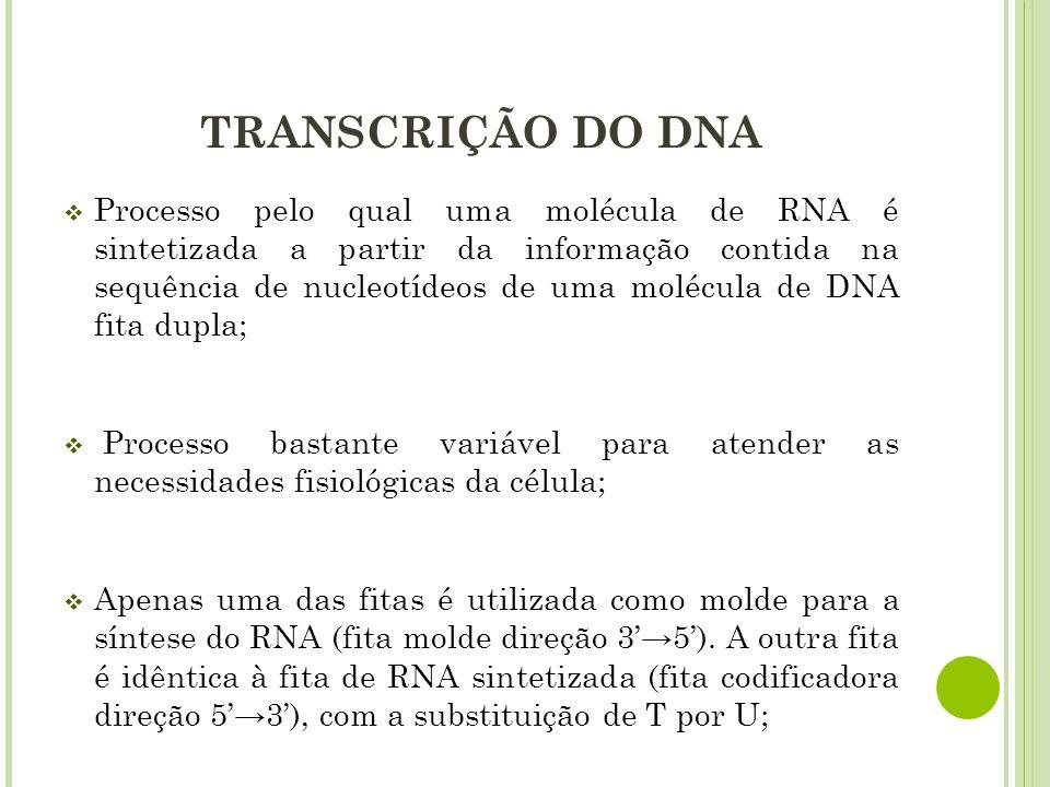 INÍCIO DA TRANSCRIÇÃO O DNA apresenta sequências específicas, denominadas PROMOTORES, que sinalizam exatamente onde a síntese do RNA deve ser iniciada; São sequências de 100 a 200 nucleotídeos próximos ao sítio de início da transcrição; Os promotores são, primeiramente, reconhecidos por fatores de transcrição que, ligados ao DNA, interagem com outros fatores, formando um complexo ao qual a RNA polimerase se associa; A RNA polimerase liga-se frouxamente à dupla fita de DNA e reconhece o promotor.