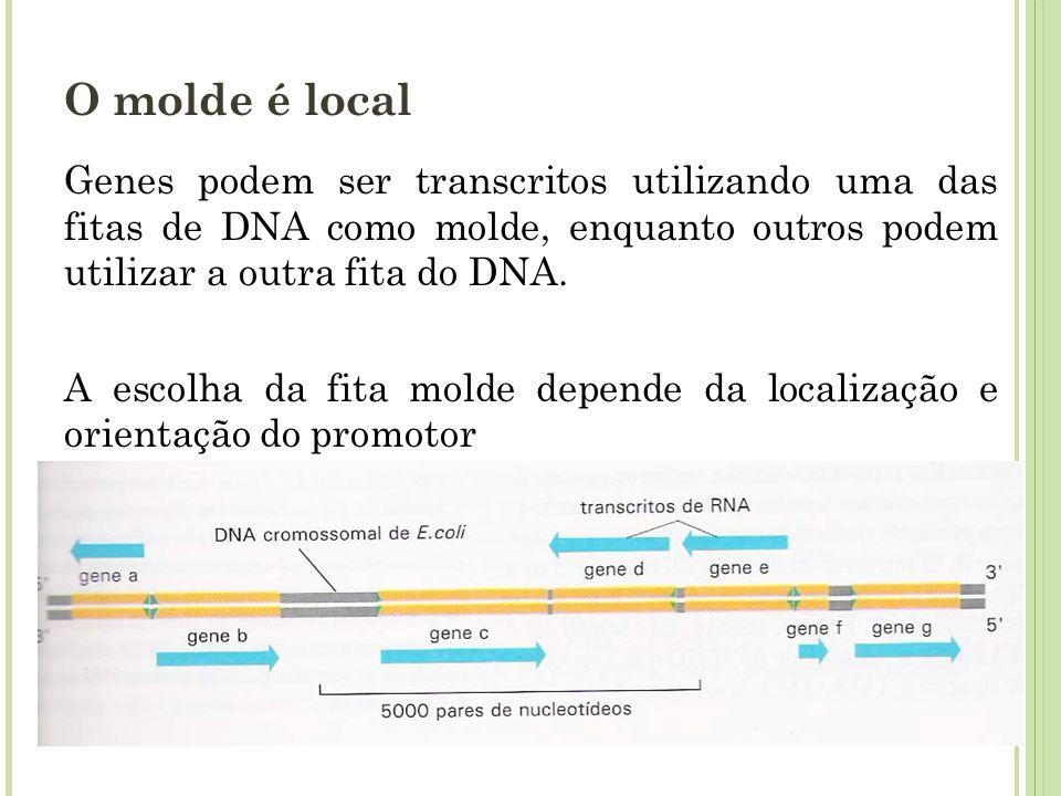O molde é local Genes podem ser transcritos utilizando uma das fitas de DNA como molde, enquanto outros podem utilizar a outra fita do DNA. A escolha