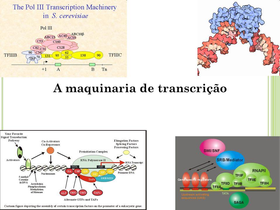 ATIVIDADES DA RNA POLIMERASE 1.Reconhecem e ligam-se em sequências específicas do DNA; 2.
