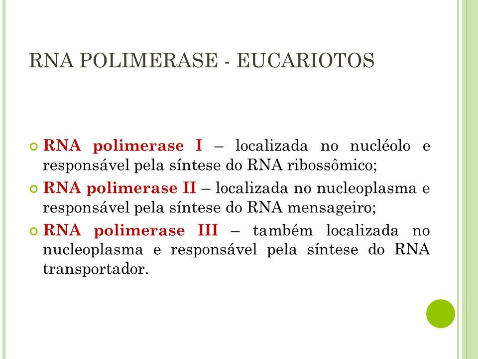RNA POLIMERASE - PROCARIOTOS SubunidadePapel a Participa da iniciação, liga-se a sequências reguladoras b Participa da iniciação e alongamento, forma ligações fosfodiéster b Liga-se a molde de DNA s Reconhece promotor, inicia síntese (dissociando- se logo após)