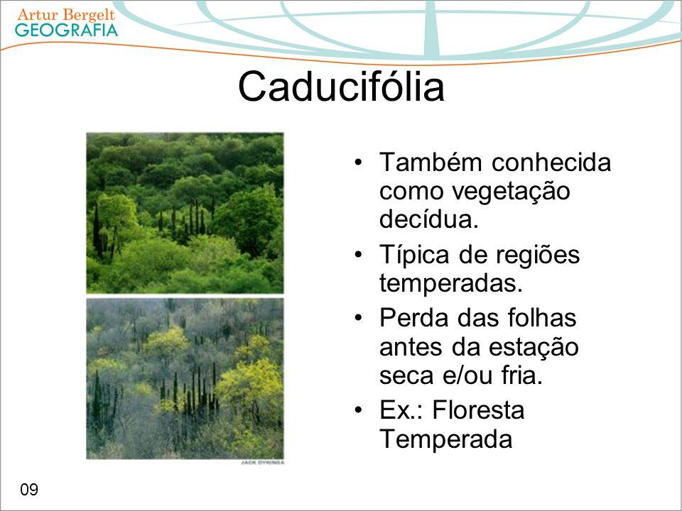 Caducifólia Também conhecida como vegetação decídua. Típica de regiões temperadas. Perda das folhas antes da estação seca e/ou fria. Ex.: Floresta Tem