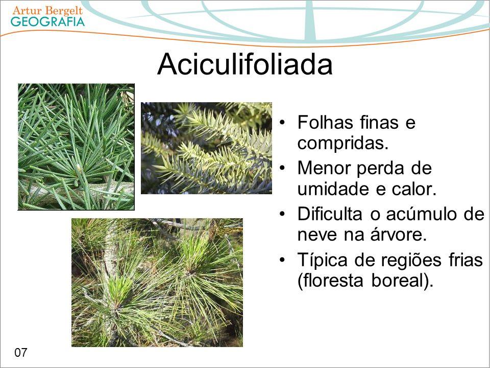 Aciculifoliada Folhas finas e compridas. Menor perda de umidade e calor. Dificulta o acúmulo de neve na árvore. Típica de regiões frias (floresta bore