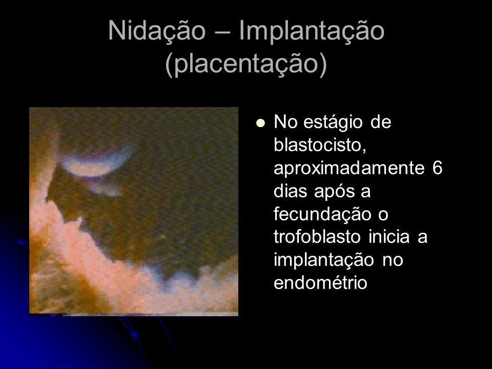 Nidação – Implantação (placentação) No estágio de blastocisto, aproximadamente 6 dias após a fecundação o trofoblasto inicia a implantação no endométr