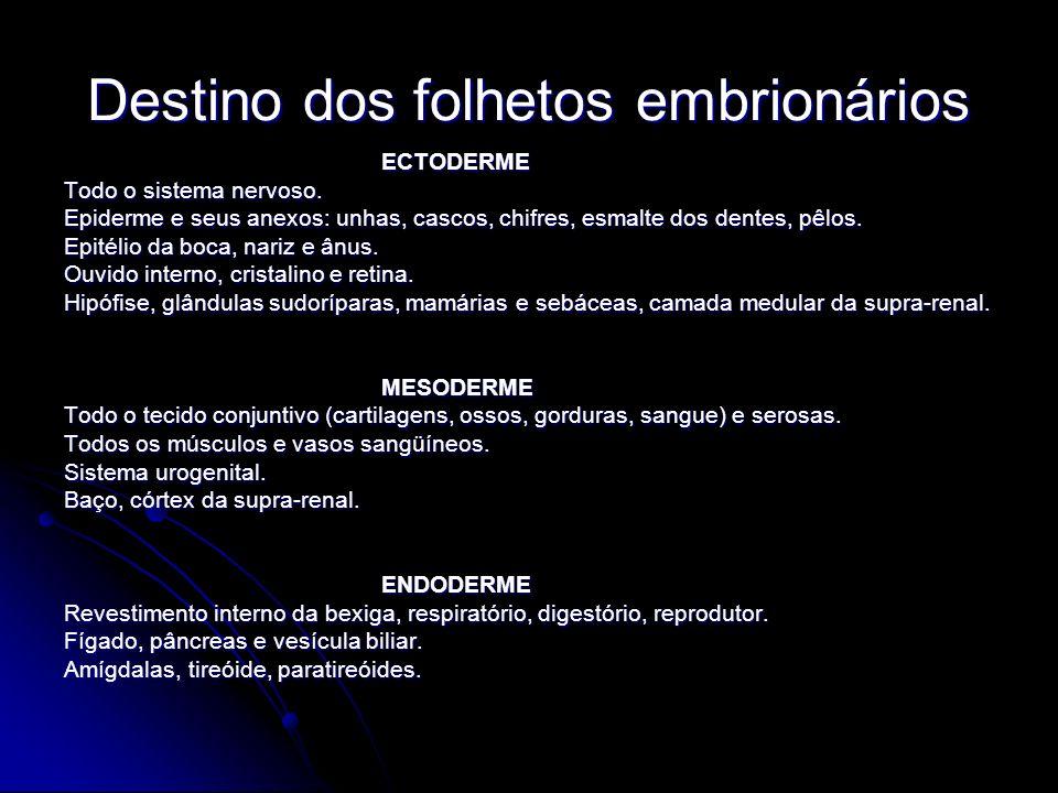 Destino dos folhetos embrionários ECTODERME Todo o sistema nervoso. Epiderme e seus anexos: unhas, cascos, chifres, esmalte dos dentes, pêlos. Epitéli