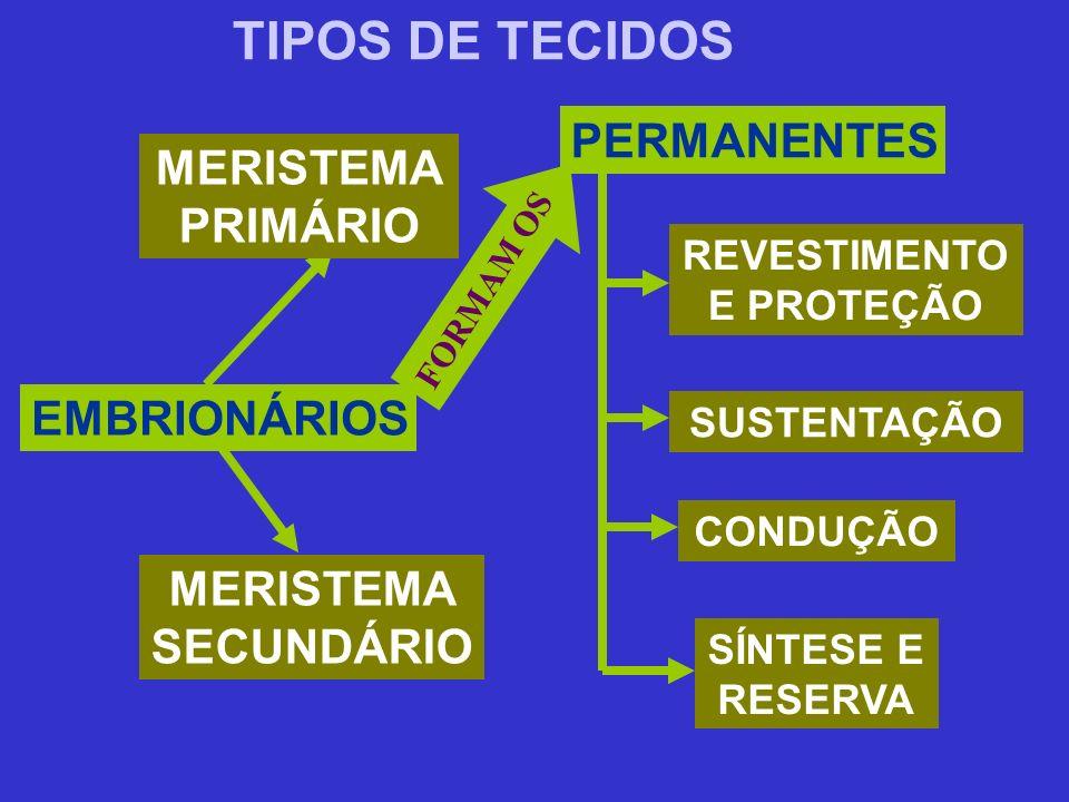 TIPOS DE TECIDOS EMBRIONÁRIOS MERISTEMA PRIMÁRIO MERISTEMA SECUNDÁRIO PERMANENTES REVESTIMENTO E PROTEÇÃO SUSTENTAÇÃO CONDUÇÃO SÍNTESE E RESERVA FORMA