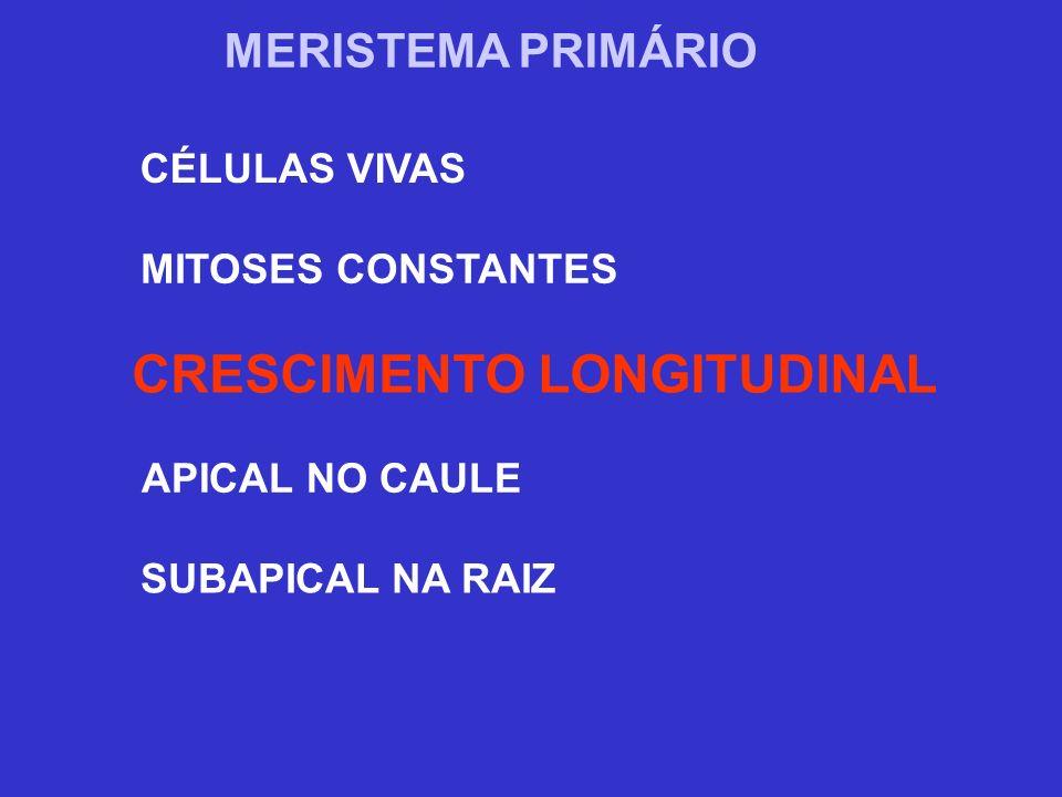 TECIDOS DE CONDUÇÃO XILEMA (LENHO) SEIVA BRUTA FLOEMA (LIBER) SEIVA ELABORADA ÁGUA E SAIS MINERAIS SOLUÇÃO DE SACAROSE