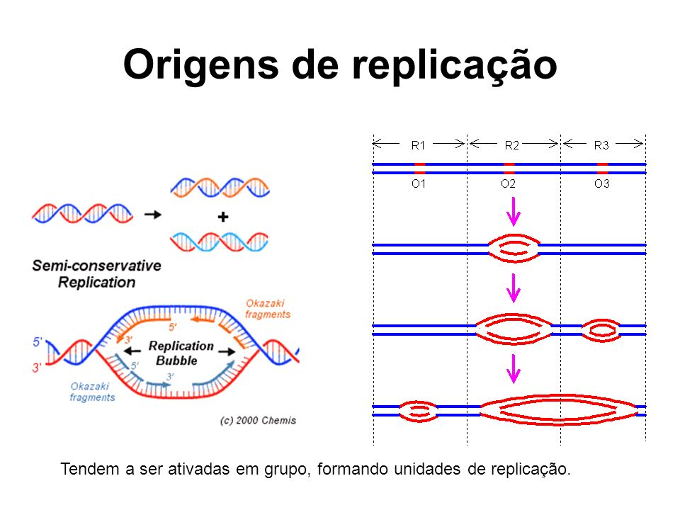 Origens de replicação Tendem a ser ativadas em grupo, formando unidades de replicação.