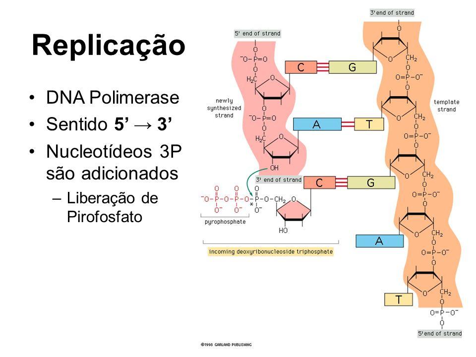 Replicação DNA Polimerase Sentido 5 3 Nucleotídeos 3P são adicionados –Liberação de Pirofosfato