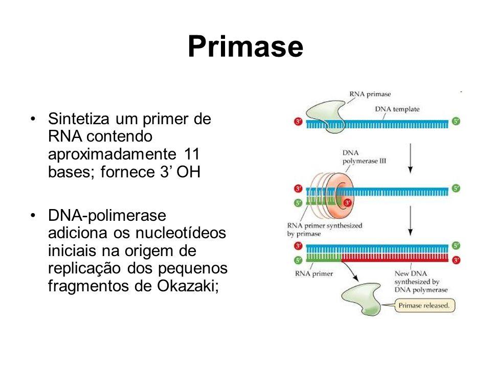 Primase Sintetiza um primer de RNA contendo aproximadamente 11 bases; fornece 3 OH DNA-polimerase adiciona os nucleotídeos iniciais na origem de repli
