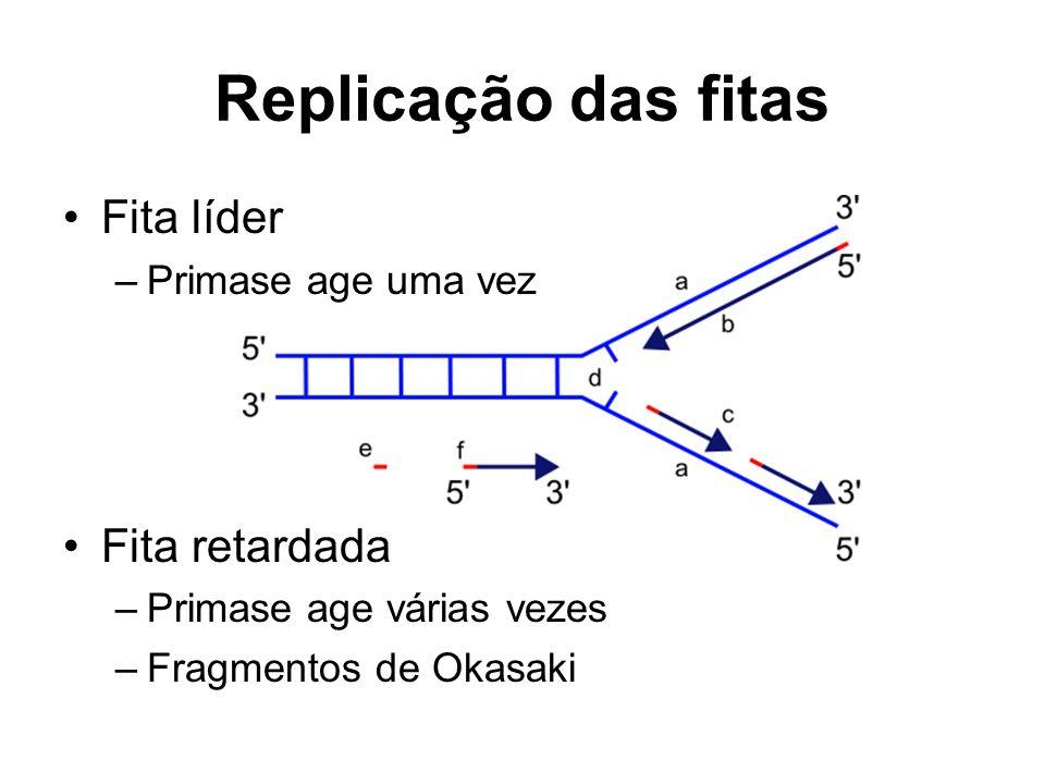 Replicação das fitas Fita líder –Primase age uma vez Fita retardada –Primase age várias vezes –Fragmentos de Okasaki