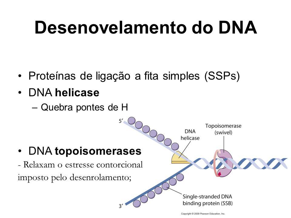Desenovelamento do DNA Proteínas de ligação a fita simples (SSPs) DNA helicase –Quebra pontes de H DNA topoisomerases - Relaxam o estresse contorciona