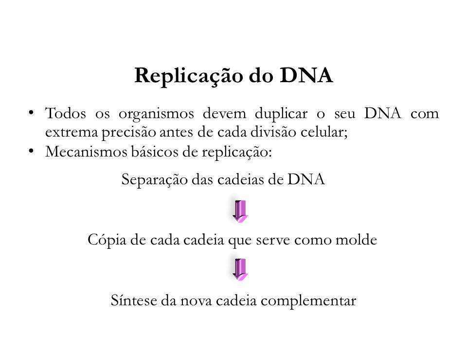 Replicação do DNA Todos os organismos devem duplicar o seu DNA com extrema precisão antes de cada divisão celular; Mecanismos básicos de replicação: S