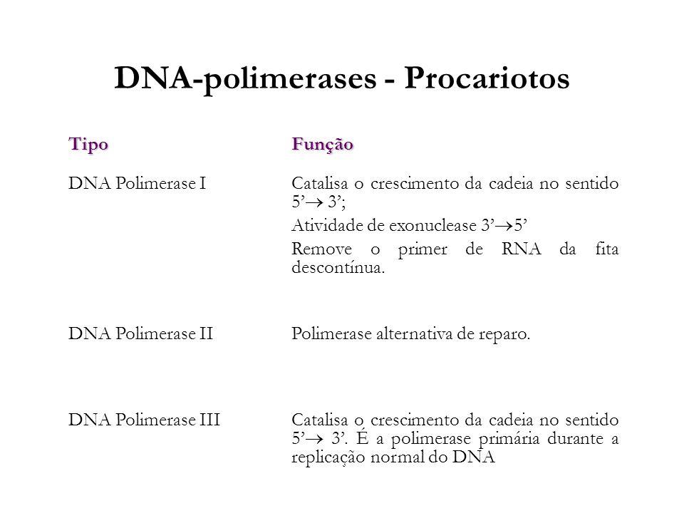 DNA-polimerases - Procariotos TipoFunção DNA Polimerase I Catalisa o crescimento da cadeia no sentido 5 3; Atividade de exonuclease 3 5 Remove o prime