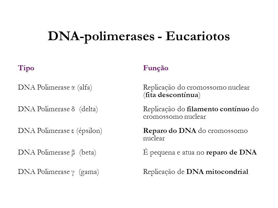 DNA-polimerases - Eucariotos TipoFunção DNA Polimerase α (alfa) Replicação do cromossomo nuclear (fita descontínua) DNA Polimerase δ (delta) Replicaçã