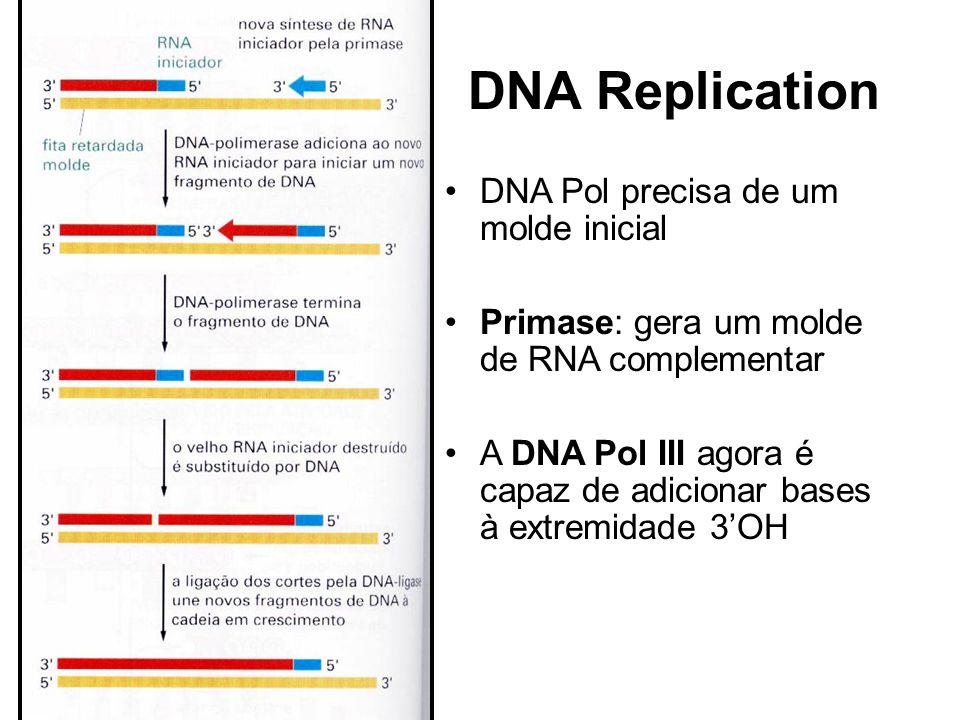DNA Replication DNA Pol precisa de um molde inicial Primase: gera um molde de RNA complementar A DNA Pol III agora é capaz de adicionar bases à extrem