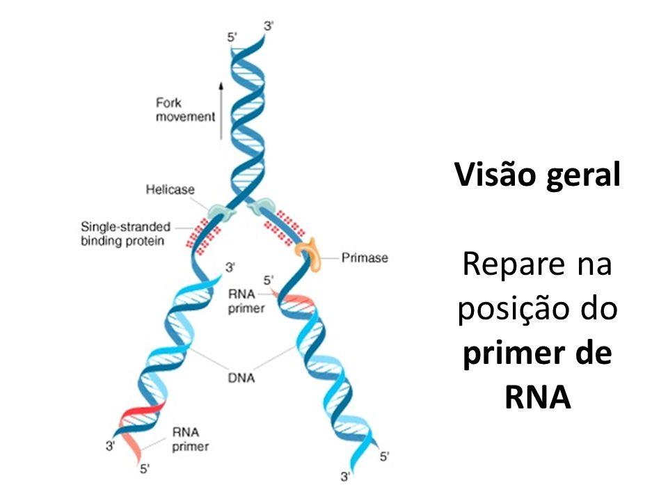 Visão geral Repare na posição do primer de RNA