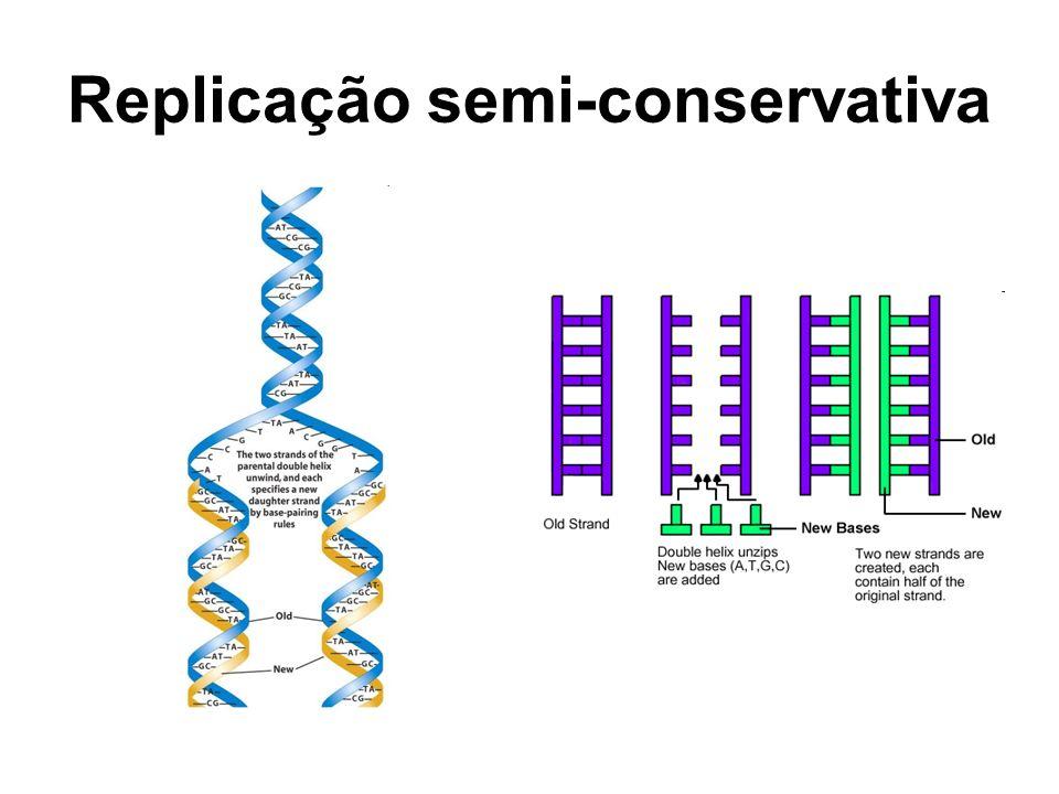Replicação semi-conservativa