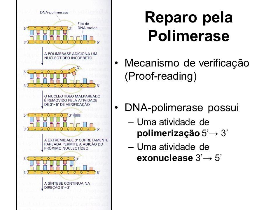Reparo pela Polimerase Mecanismo de verificação (Proof-reading) DNA-polimerase possui –Uma atividade de polimerização 5 3 –Uma atividade de exonucleas