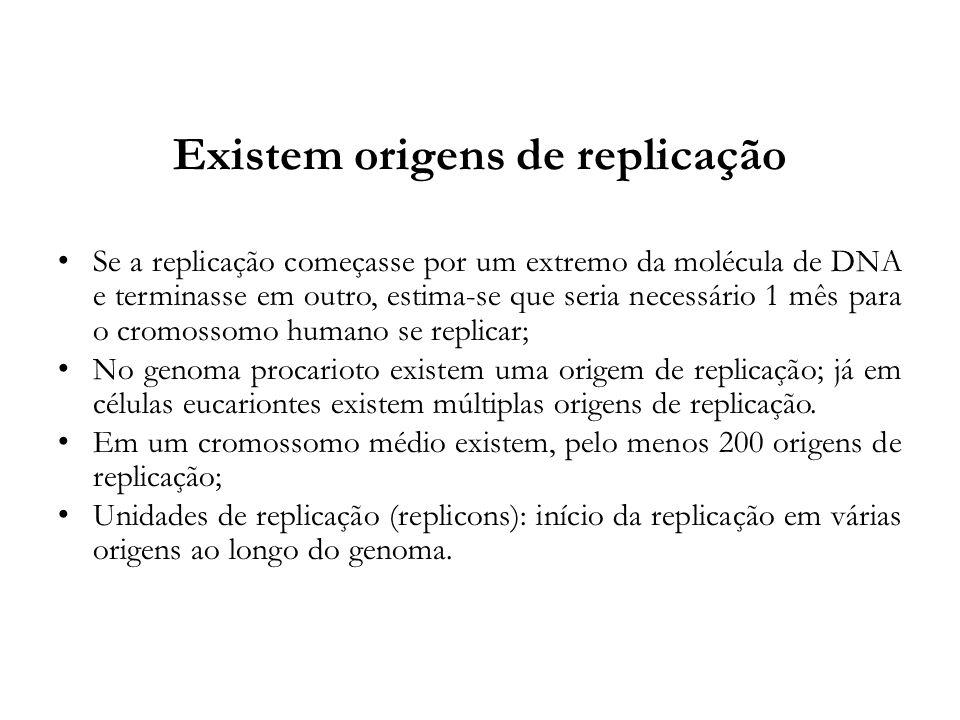 Existem origens de replicação Se a replicação começasse por um extremo da molécula de DNA e terminasse em outro, estima-se que seria necessário 1 mês