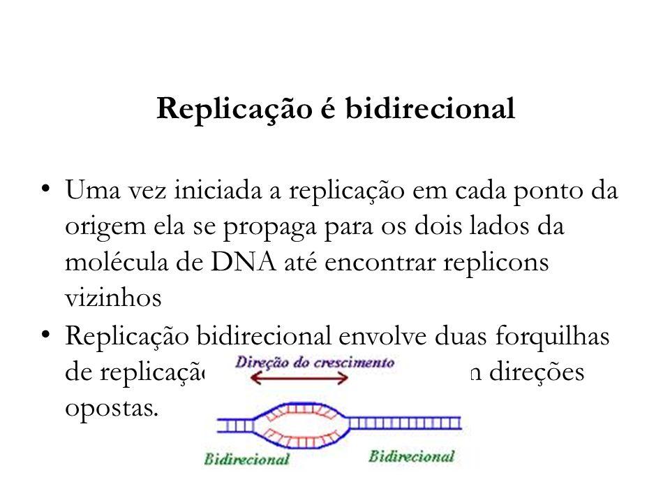 Replicação é bidirecional Uma vez iniciada a replicação em cada ponto da origem ela se propaga para os dois lados da molécula de DNA até encontrar rep