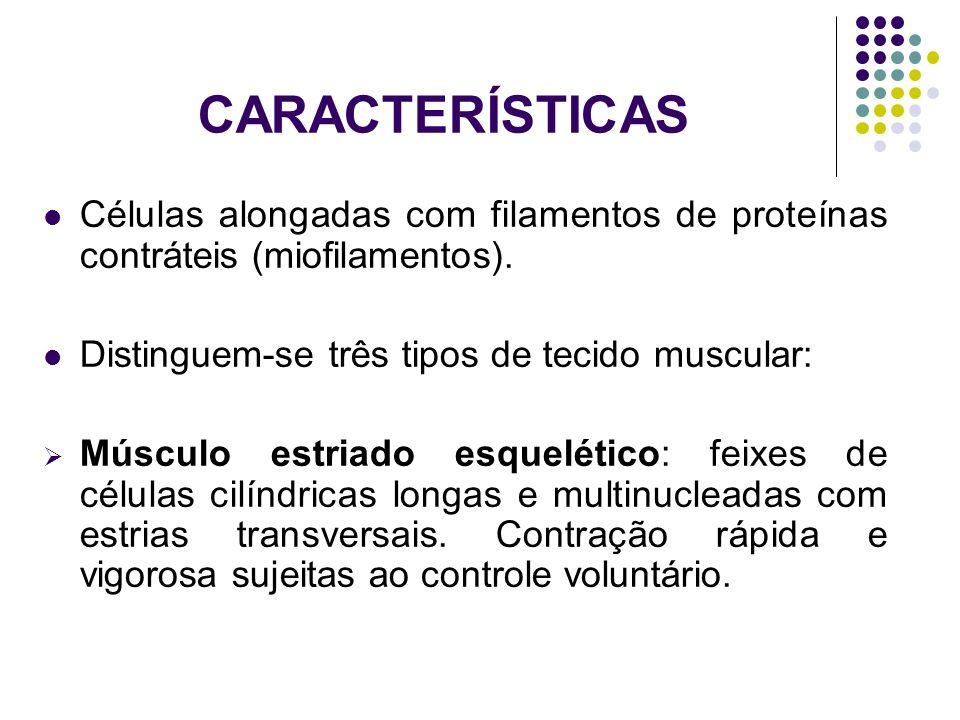 CARACTERÍSTICAS Células alongadas com filamentos de proteínas contráteis (miofilamentos). Distinguem-se três tipos de tecido muscular: Músculo estriad