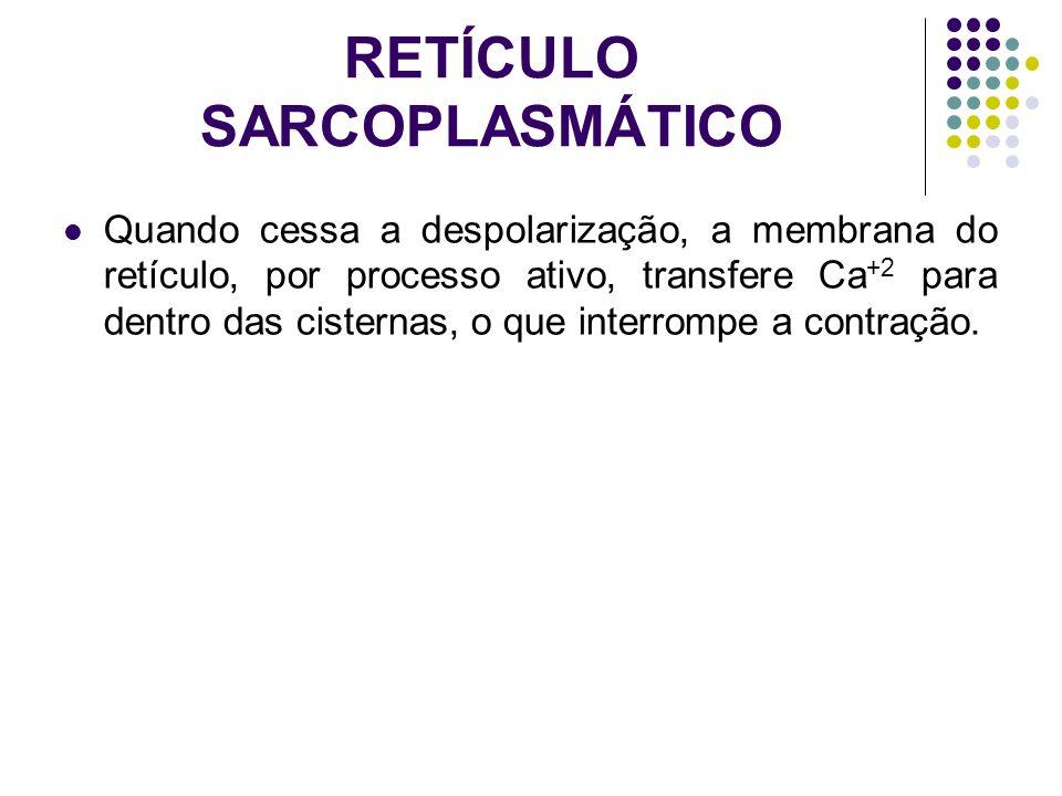 RETÍCULO SARCOPLASMÁTICO Quando cessa a despolarização, a membrana do retículo, por processo ativo, transfere Ca +2 para dentro das cisternas, o que i