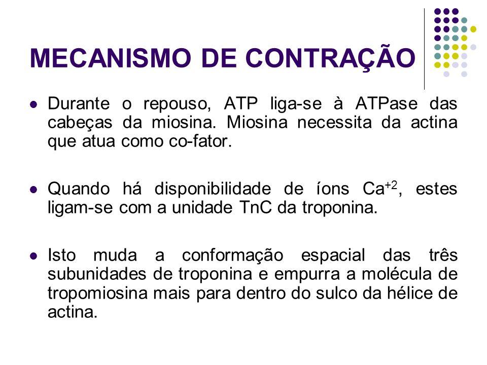 MECANISMO DE CONTRAÇÃO Durante o repouso, ATP liga-se à ATPase das cabeças da miosina. Miosina necessita da actina que atua como co-fator. Quando há d