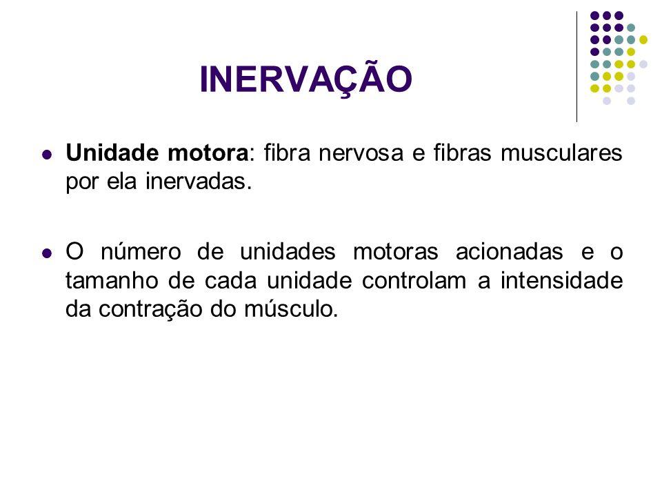 INERVAÇÃO Unidade motora: fibra nervosa e fibras musculares por ela inervadas. O número de unidades motoras acionadas e o tamanho de cada unidade cont