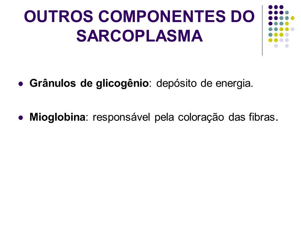OUTROS COMPONENTES DO SARCOPLASMA Grânulos de glicogênio: depósito de energia. Mioglobina: responsável pela coloração das fibras.