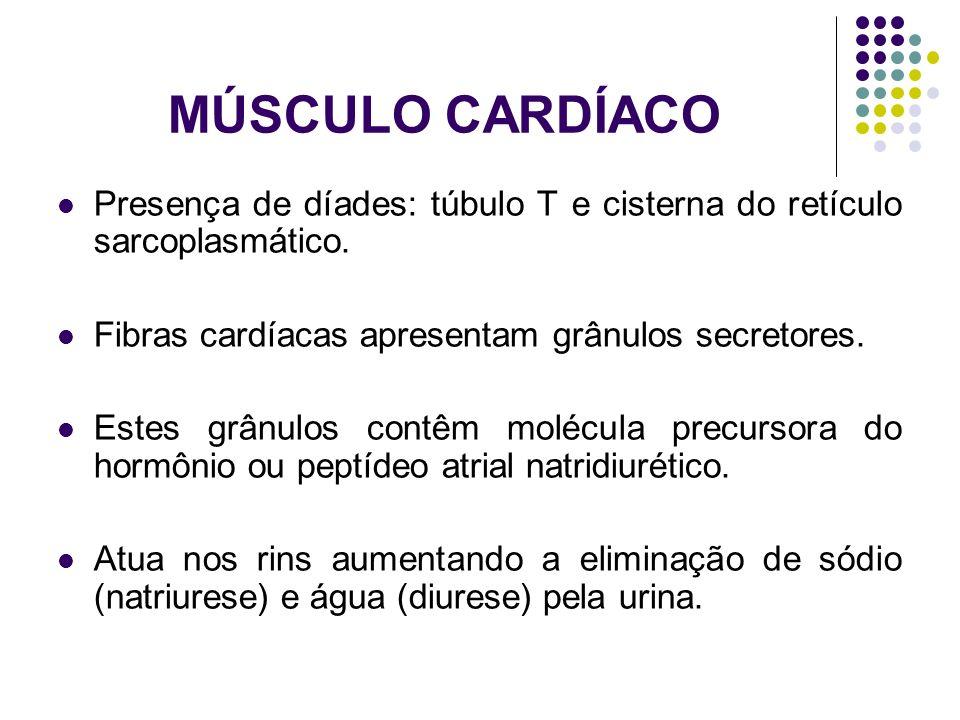 MÚSCULO CARDÍACO Presença de díades: túbulo T e cisterna do retículo sarcoplasmático. Fibras cardíacas apresentam grânulos secretores. Estes grânulos