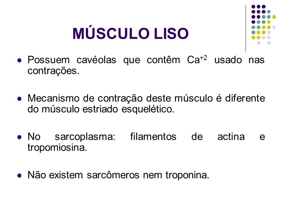 MÚSCULO LISO Possuem cavéolas que contêm Ca +2 usado nas contrações. Mecanismo de contração deste músculo é diferente do músculo estriado esquelético.