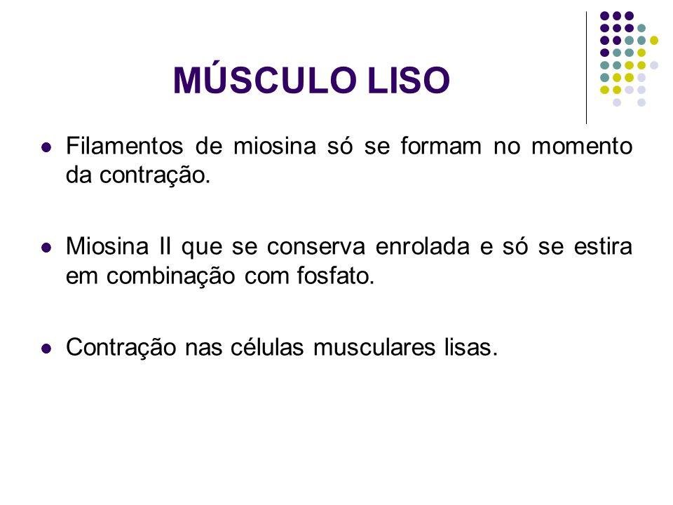 MÚSCULO LISO Filamentos de miosina só se formam no momento da contração. Miosina II que se conserva enrolada e só se estira em combinação com fosfato.
