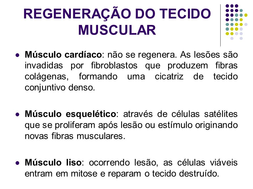 REGENERAÇÃO DO TECIDO MUSCULAR Músculo cardíaco: não se regenera. As lesões são invadidas por fibroblastos que produzem fibras colágenas, formando uma