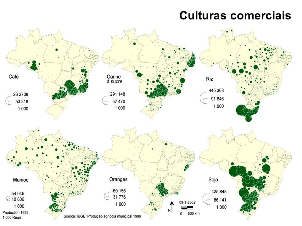 CANA DE AÇÚCAR